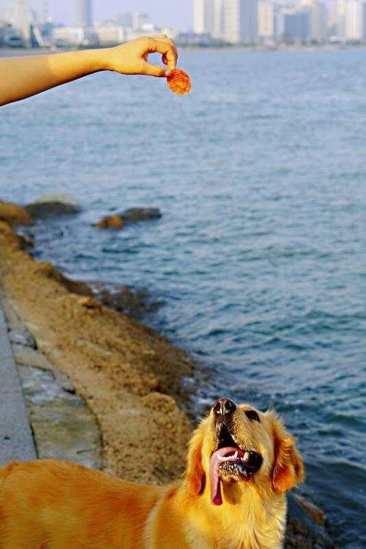 フリスビーチップス イメージ画像